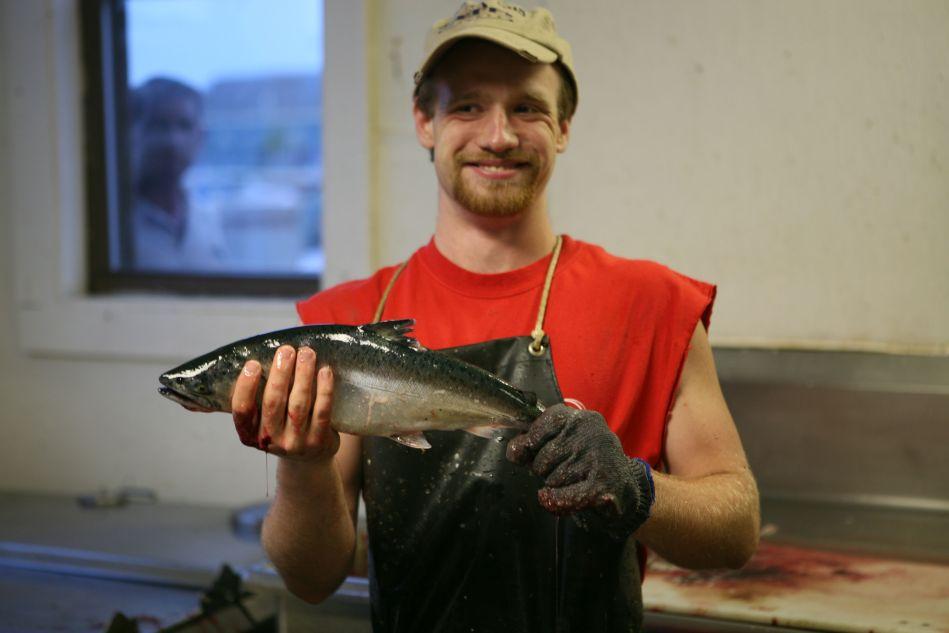 Coho Derby Sheboygan Fish Preparers