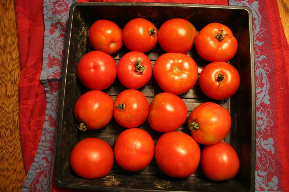 Tomatoes Grown and Harvested by Pat Kelly