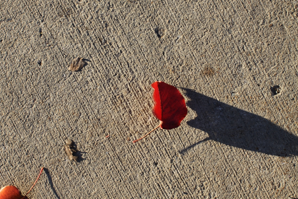Tiny leaf-big shadow