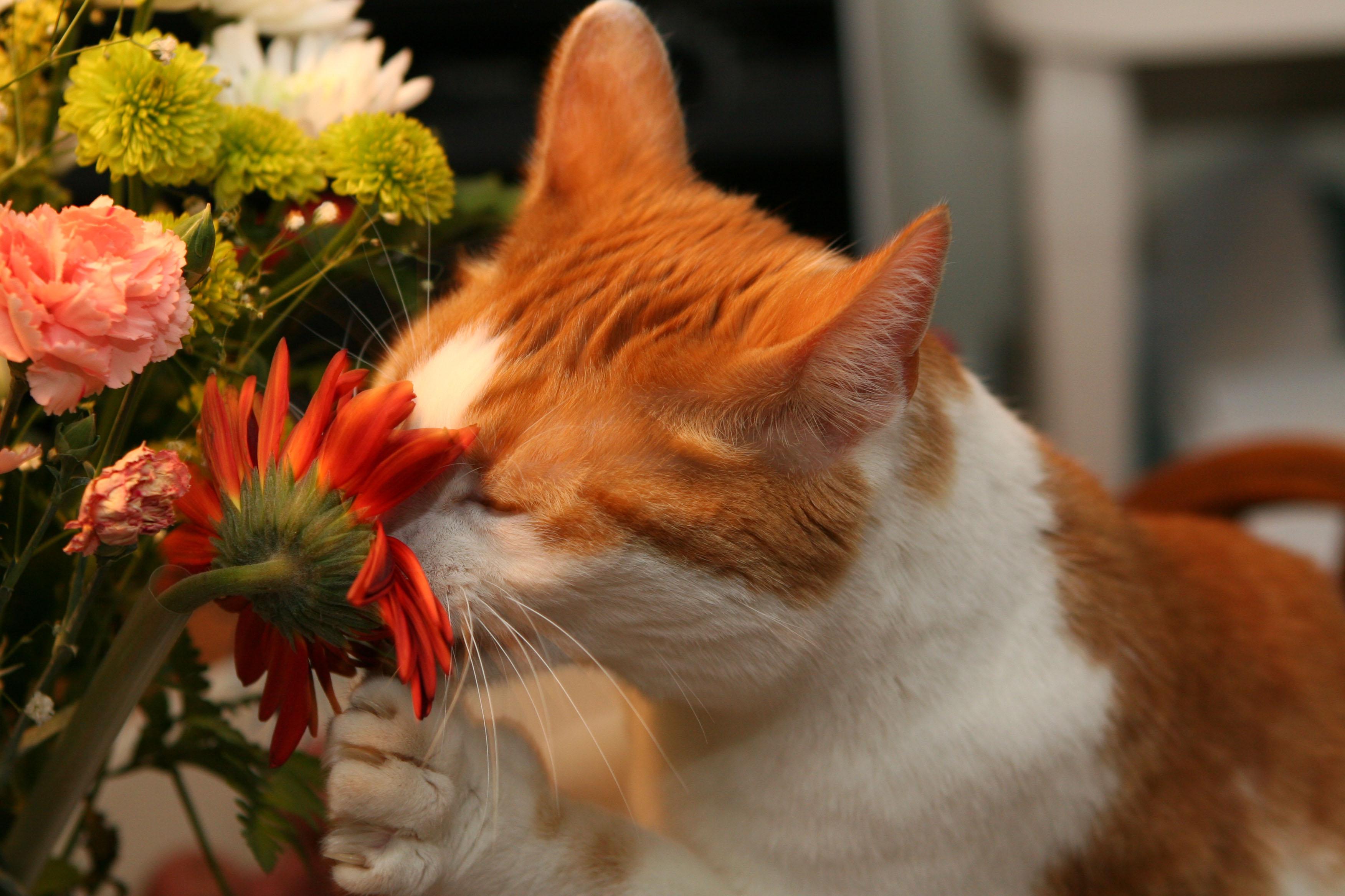 Cat Smells Like Litter Boc