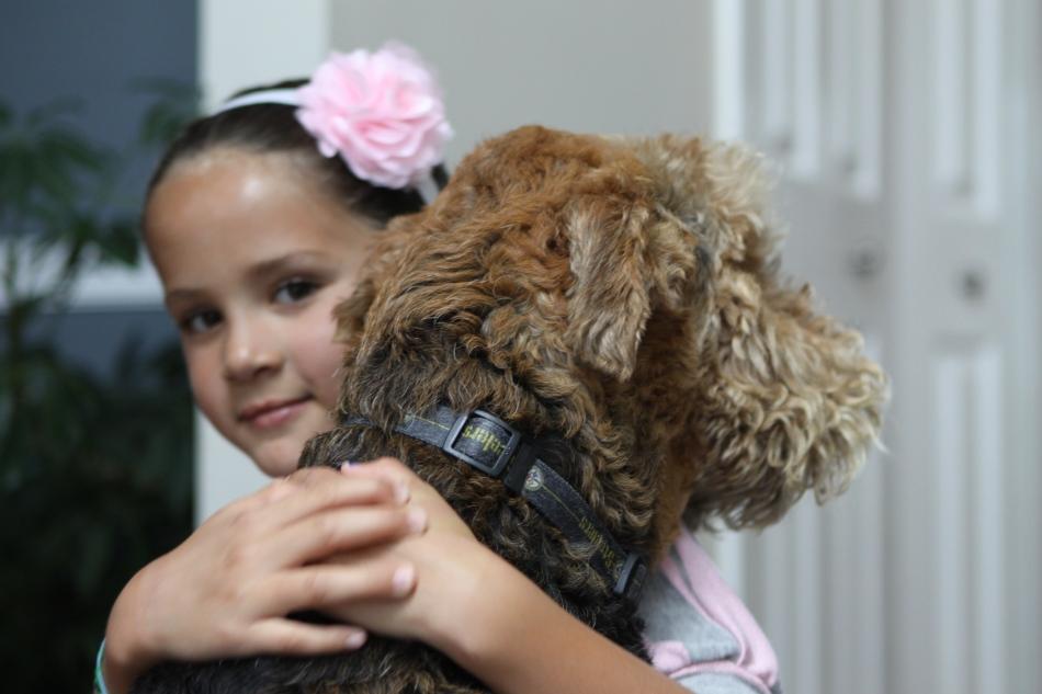 Windsor Dog Rescue