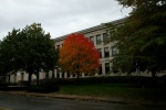 Schenley HS For Sale with tree