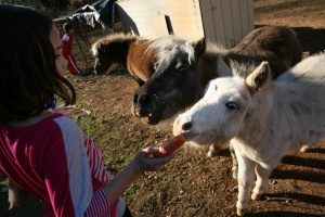 What do you get when you cross a miniature horse and a donkey?