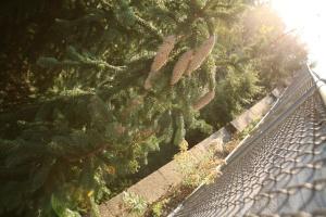 Pine Cones Renewal Chain Link