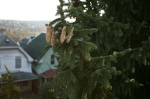 pinecones houses