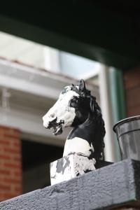 horses-head