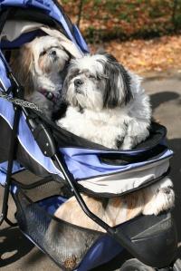 Three Dog Ride