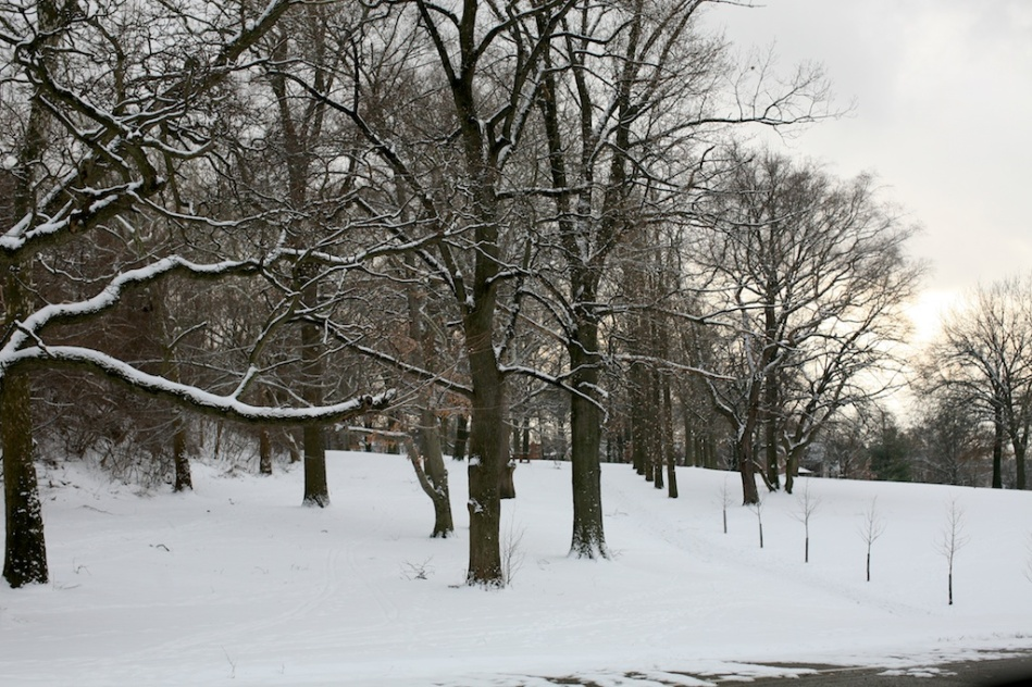 Highland Park Trees in Snow