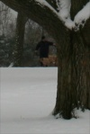 Dog Walker in the Snow