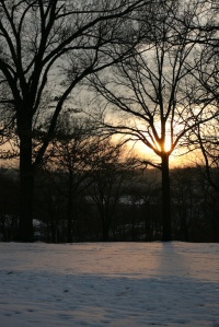 Sunset Tree in Snow