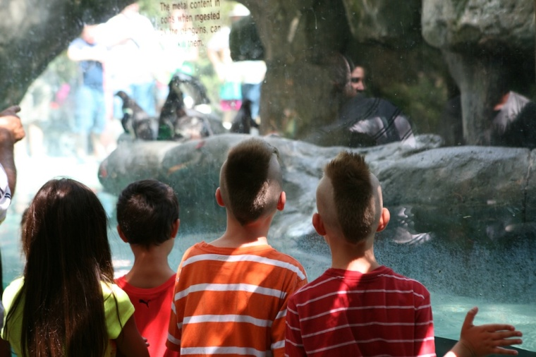 At the Penguin Tank-  Zoo