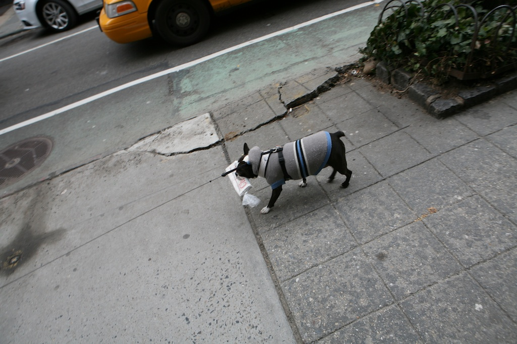 Dog carries newspaper