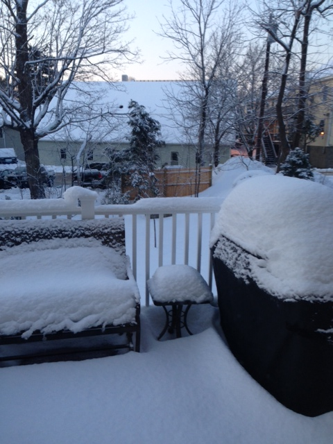 Just received from a Florida friend who is visiting friends in Boston-First Day of Spring.Thanks Kristin