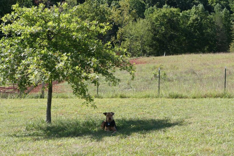 Murph under the tree in Virginia