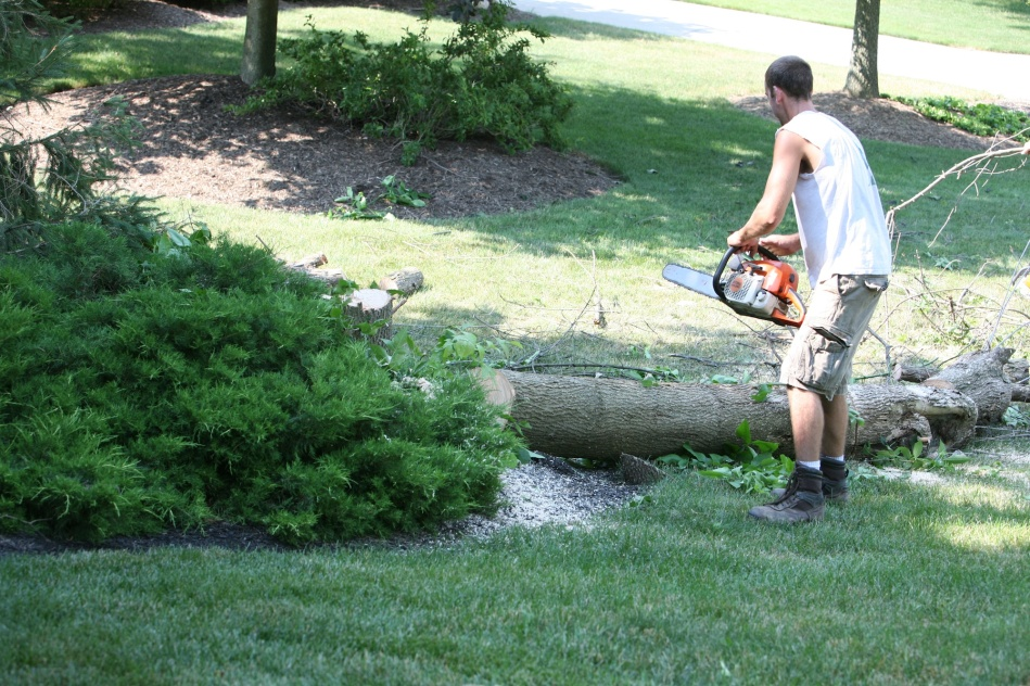 Cutting Down Tree
