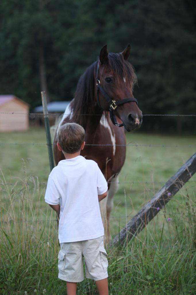 jack and the horse