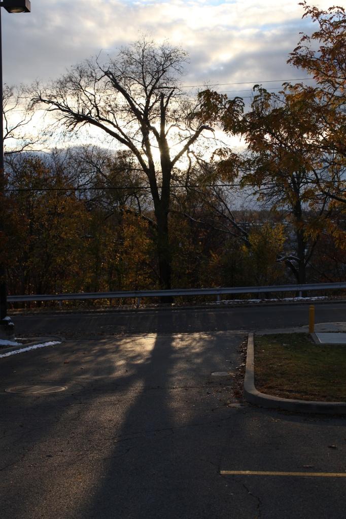 Autumn Tree in Phillips Park