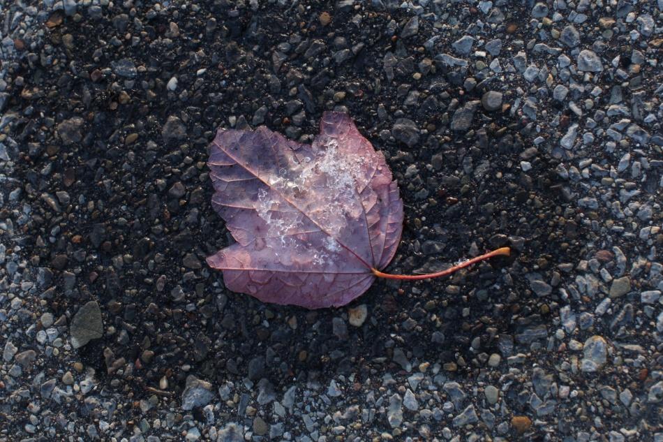 autumn leaf popsicles 6