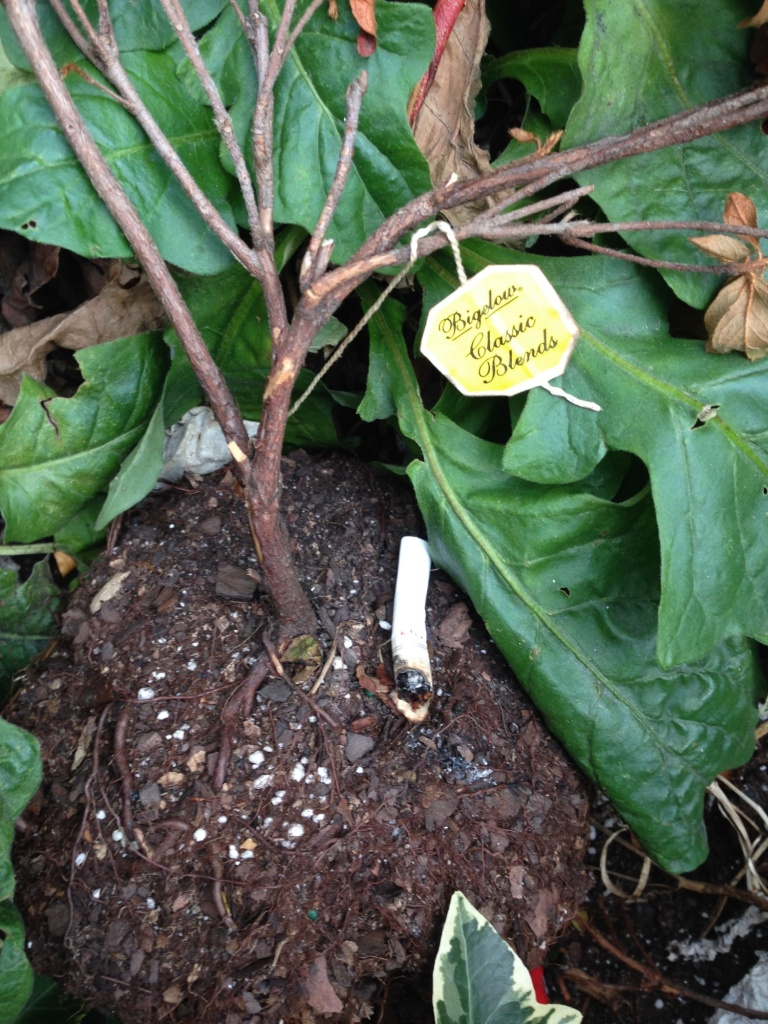 cigarette and teabag in a plant