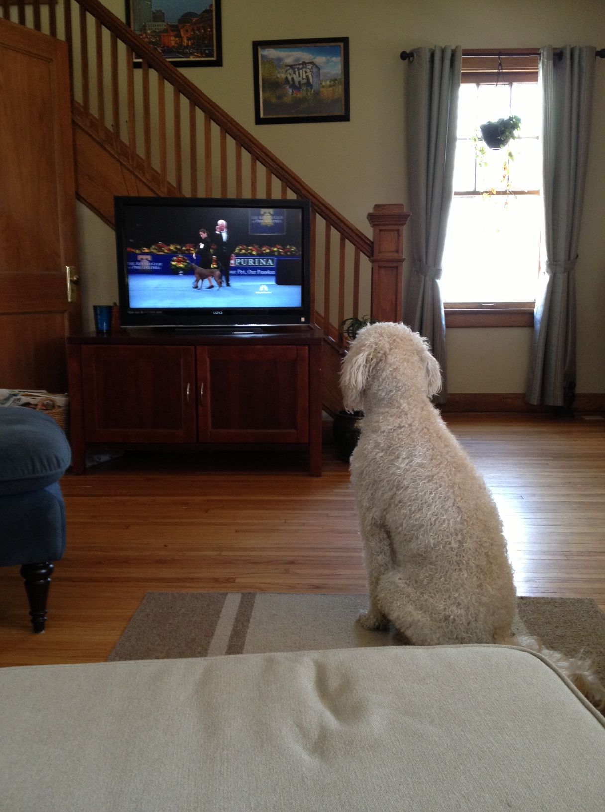 Philadelphia Kennel Club Dog Show Winner