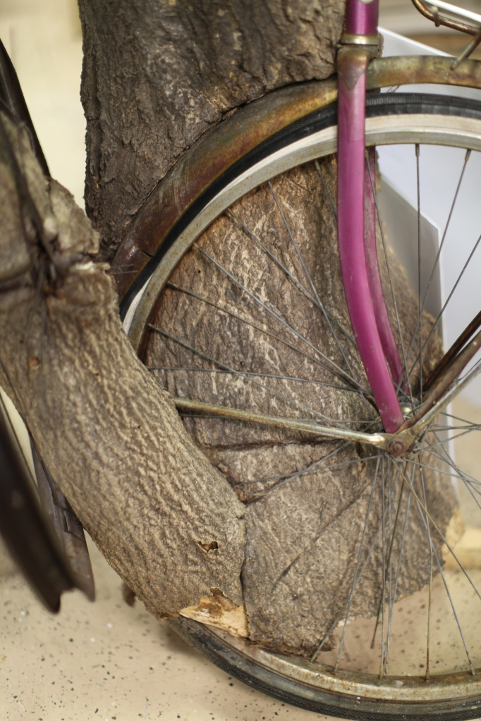 bicycle spokes and bark
