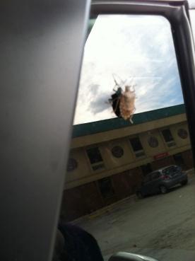 Stink bug on car window