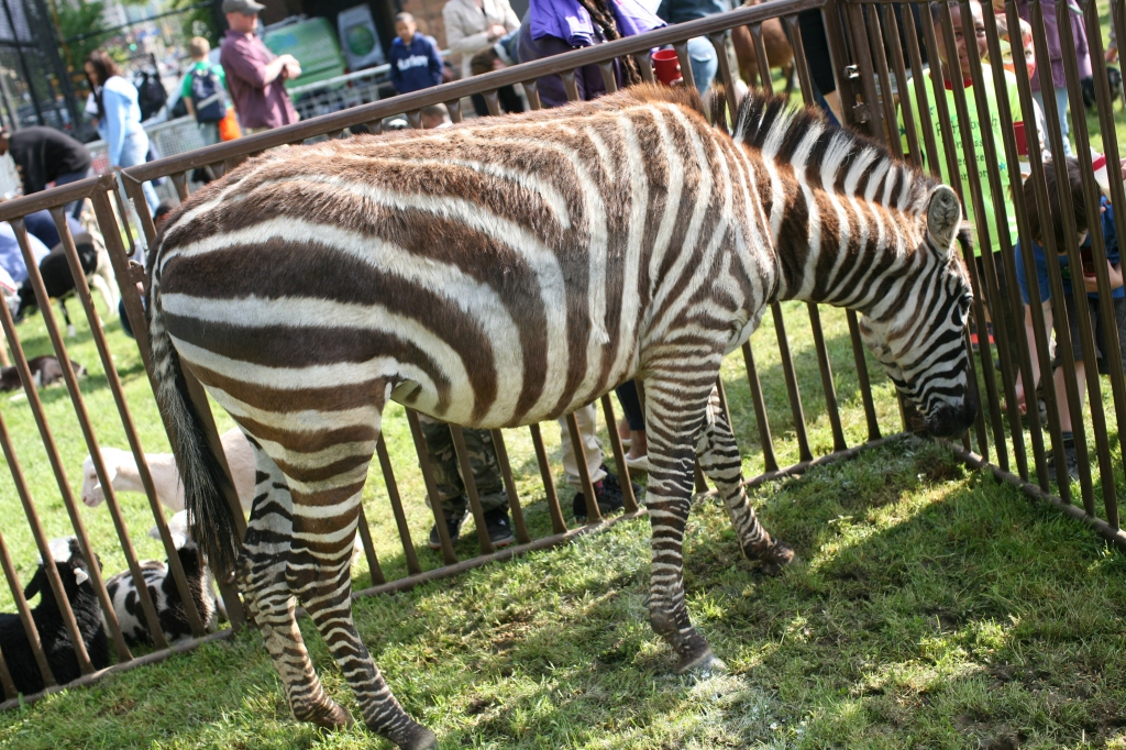 zebra stripes in light