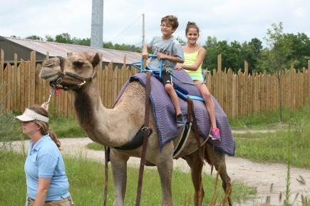 camel ride 3