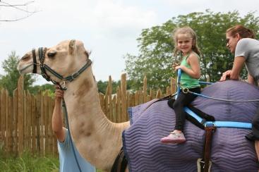 camel ride Maura