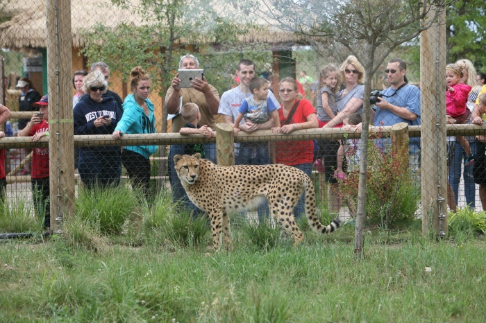 People and Cheetah