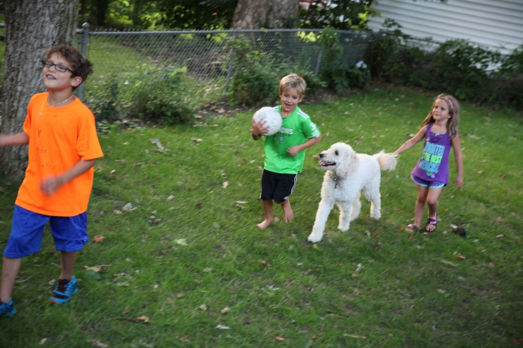 soccer dog 2