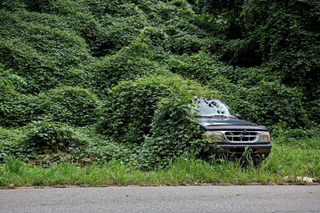 Ford Explorer SWalloed by Vines