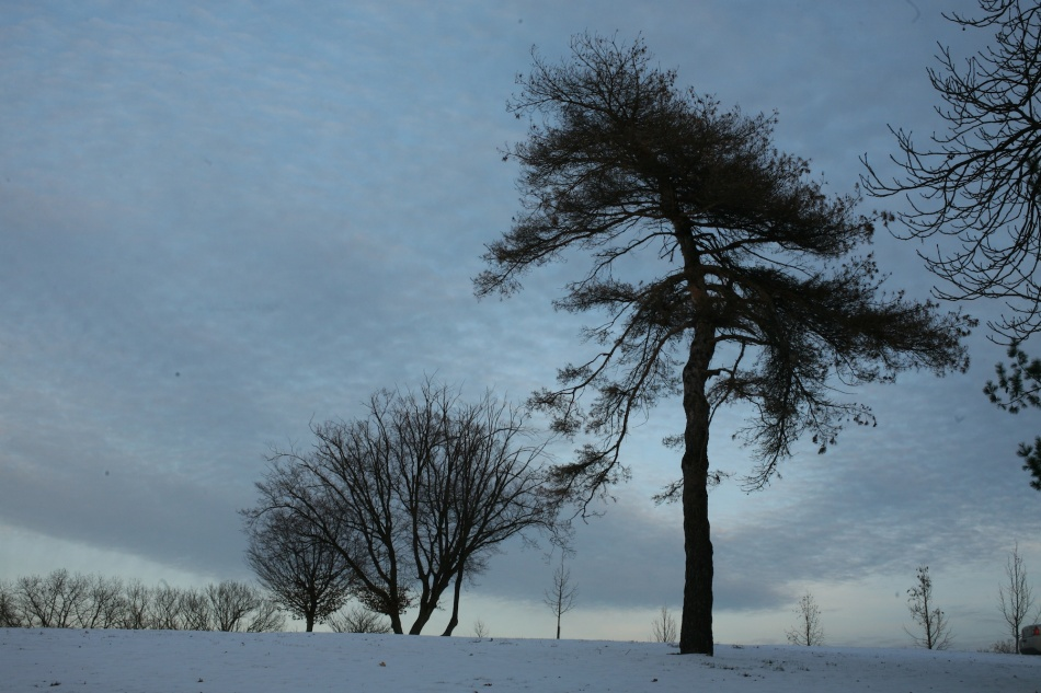 silhouette winter trees