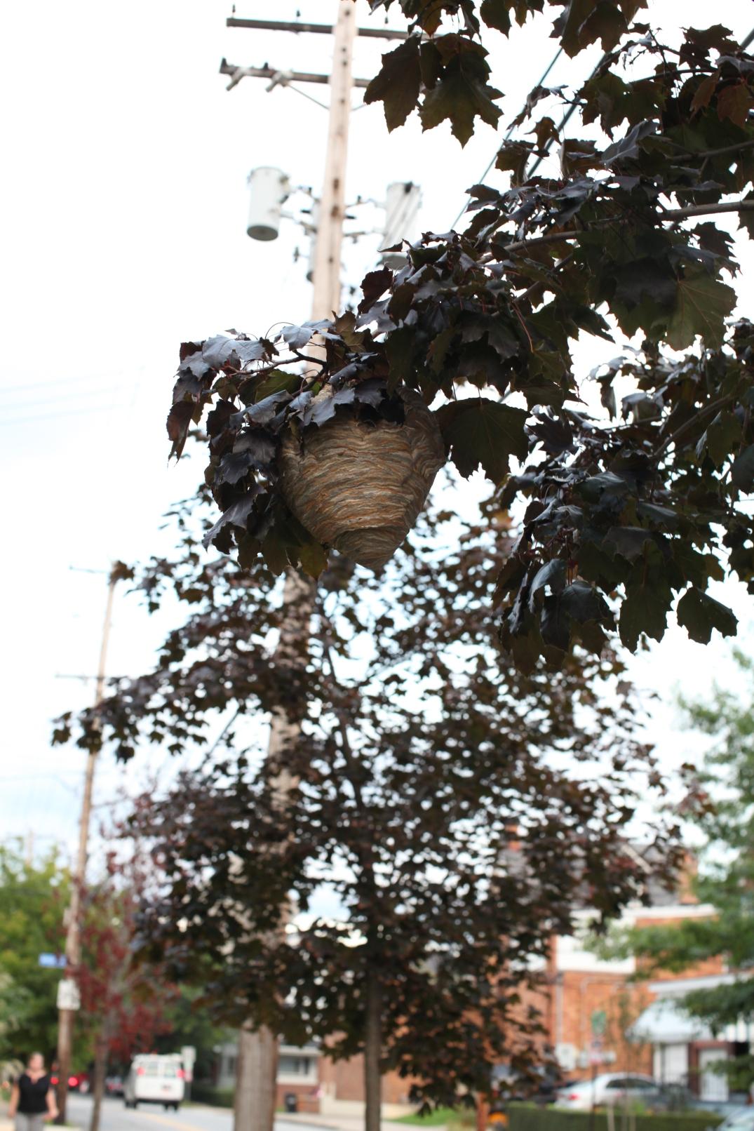 hornet nest 3