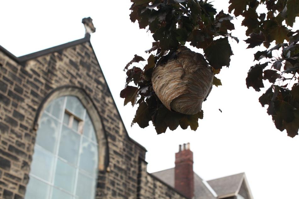 Hornet Returns to Nest