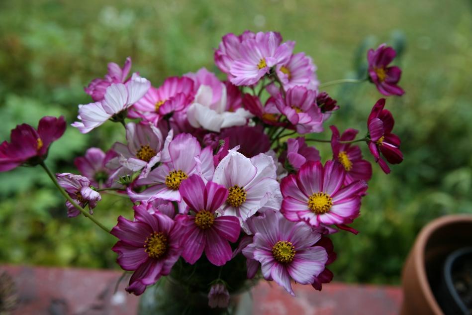 Cosmos Bouquet
