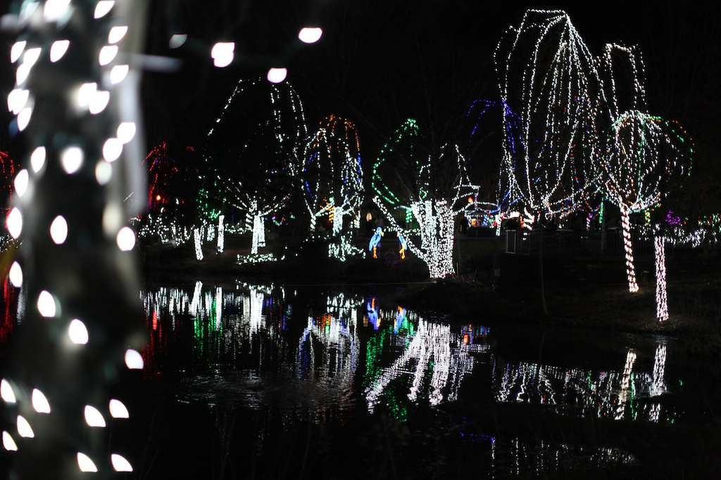 Night lIghts at the Columbus Zoo
