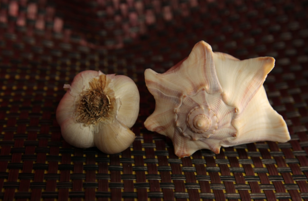 garlic and shell