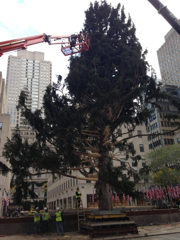 Here is a picture of the tree on the stand before the scaffolding was erected.