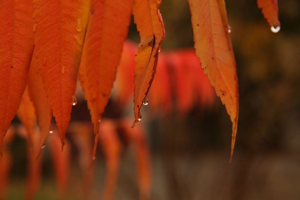 raindrops on autumn lead