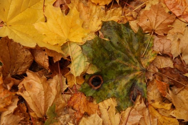 Raindrops on Fall Leaves | Ruth E Hendricks Photography