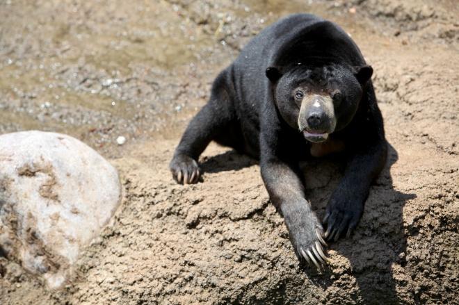 Bear Columbus Zoo