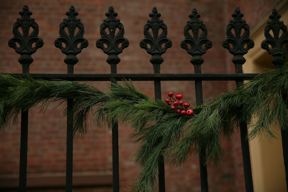 iron fence and red berries