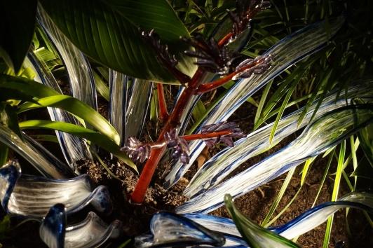 phipps lights botanic garden