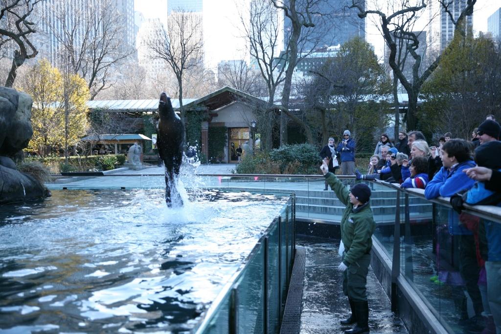 sea lion jump (1)