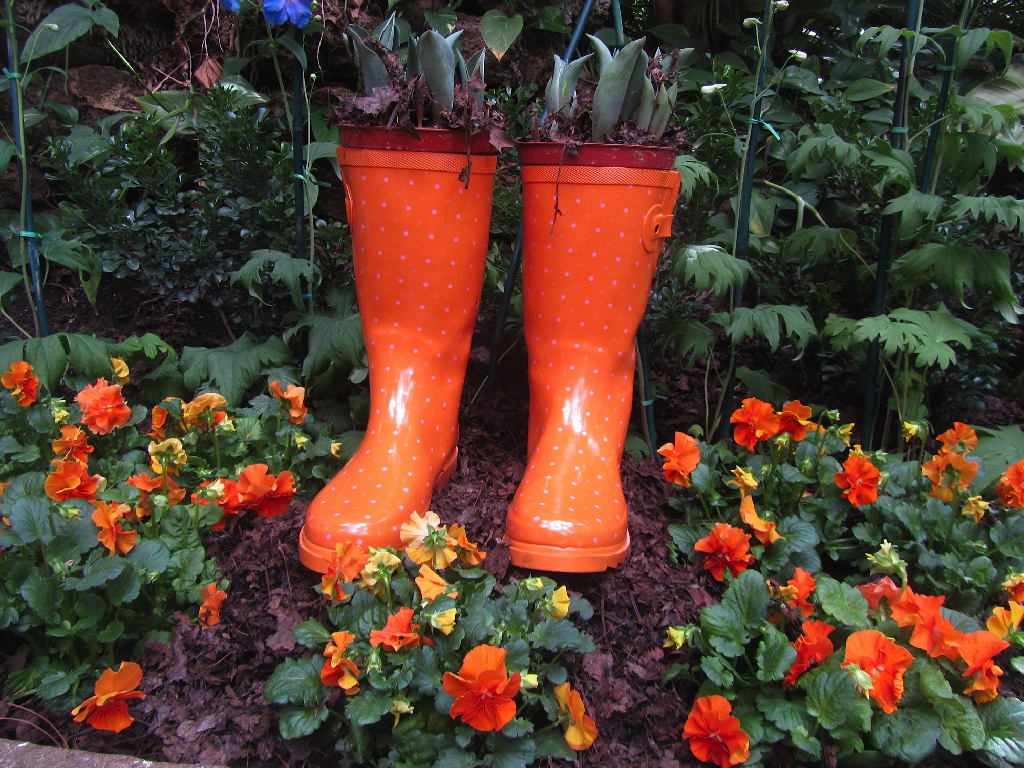 Phipps conservatory ruth e hendricks photography orange boots dhlflorist Choice Image