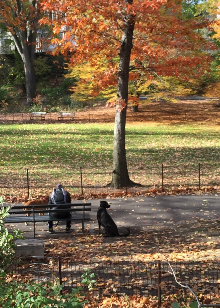 Man and Dogs Central Park