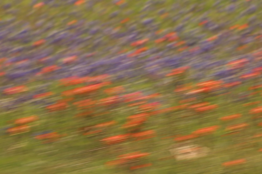 bluebonnets from the bus